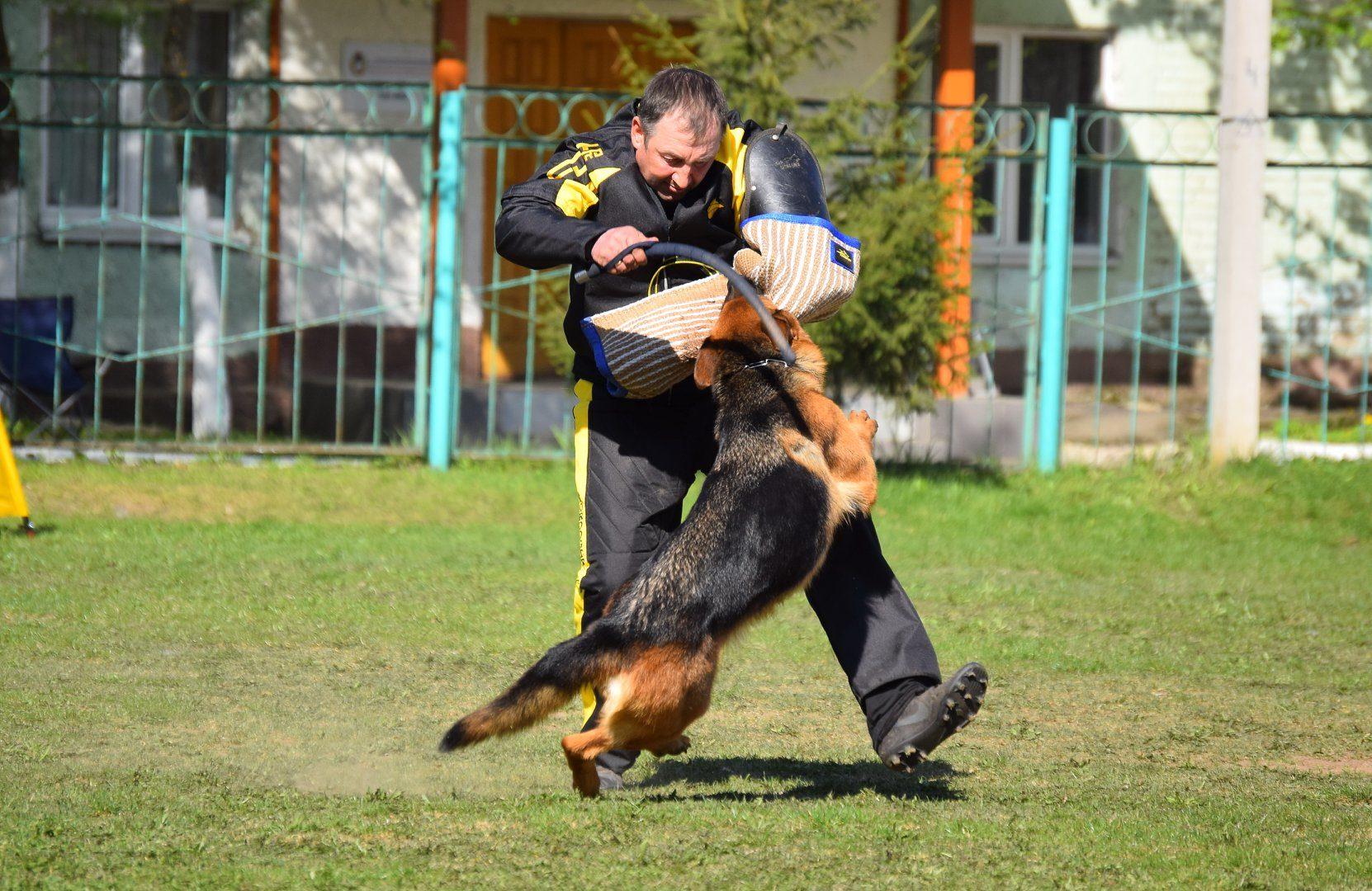 Уна - Лучшая собака по защите на выставке ПК!
