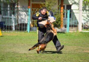 Уна – Лучшая собака по защите на выставке ПК!